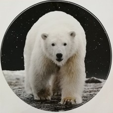"""наклейка """"Медведь (белый)"""""""