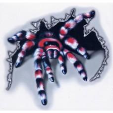 Пауки, скорпионы